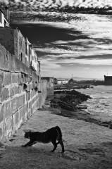 Essaouira 24.jpg