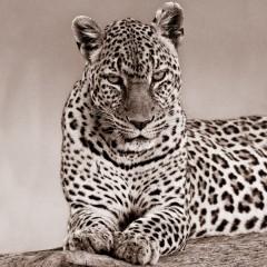 Leopard_5689.jpg